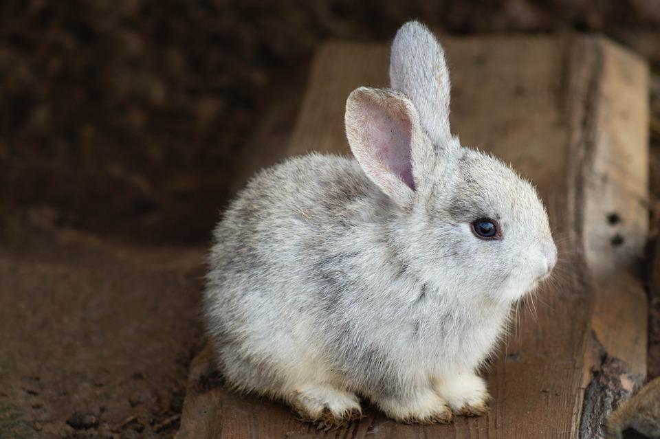 Kaninchen vor Teebaumöl schützen