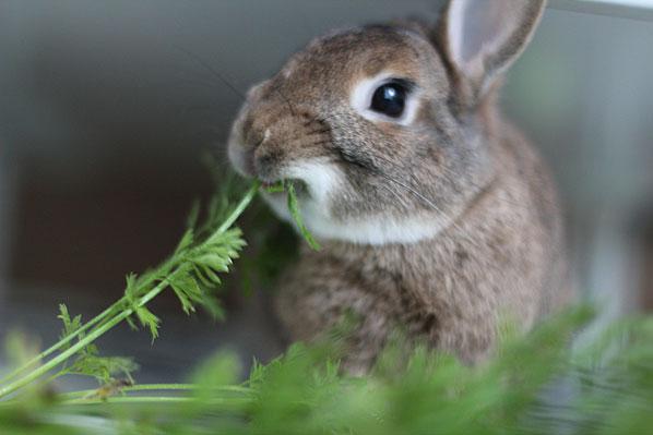 kaninchen info