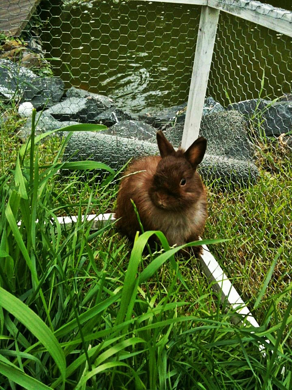 kaninchen haltung auslauf