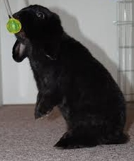 kaninchen clickertraining