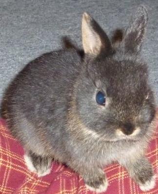 Eine Woche altes Kaninchen