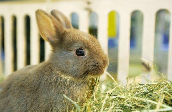 Heu als Nahrung für Kaninchen