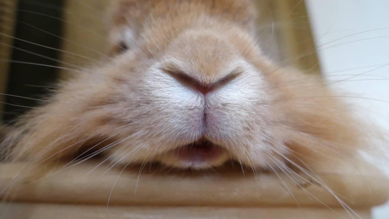 kaninchen körpersprache mund
