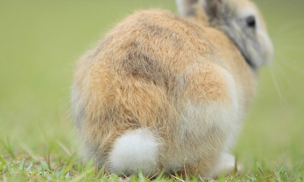 Schwanzsignale vom Kaninchen