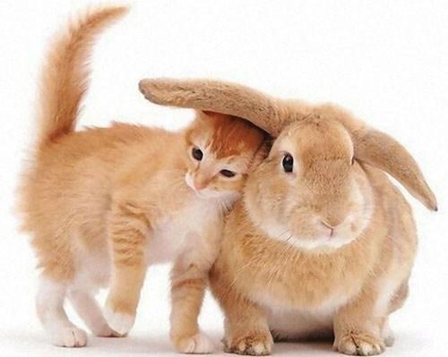 kaninchen haltung andere tiere
