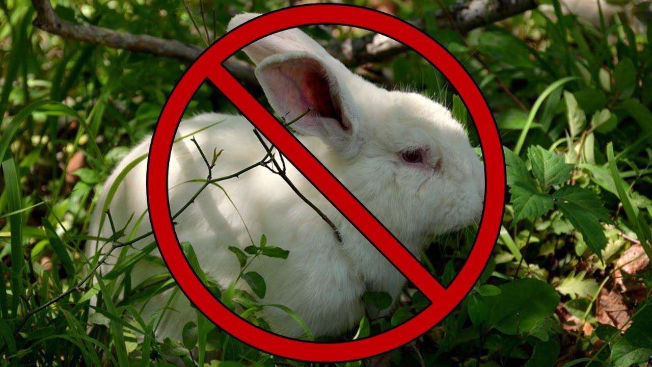 kaninchen freilandhaltung