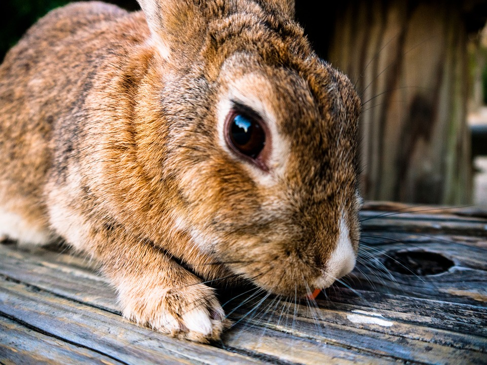 Winterhuder Kaninchen