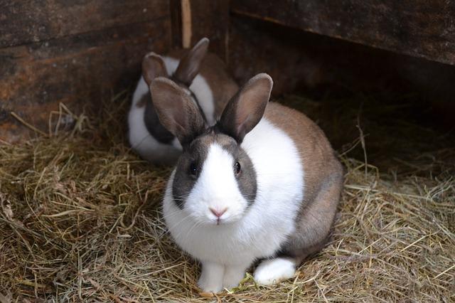 Kaninchen Außenhaltung Heu Foto