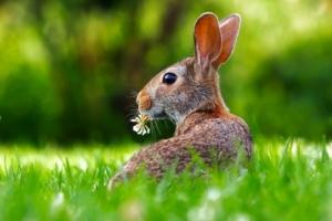 kaninchen gras