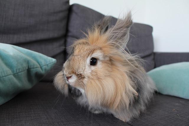 Kaninchen in der freien Wohnungshaltung Foto