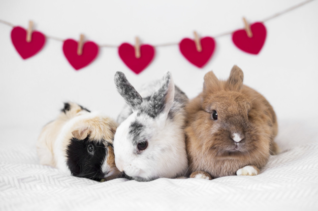 kaninchen und meerschweinchen zusammenhalten foto