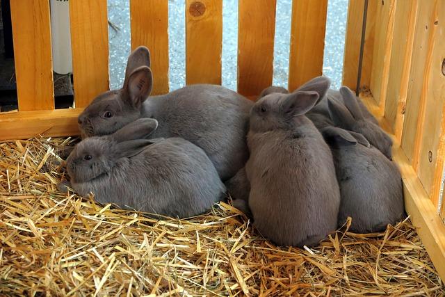 Kaninchen Gesellschaft Fotos