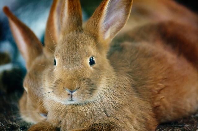 Kaninchen brauchen Ruhe