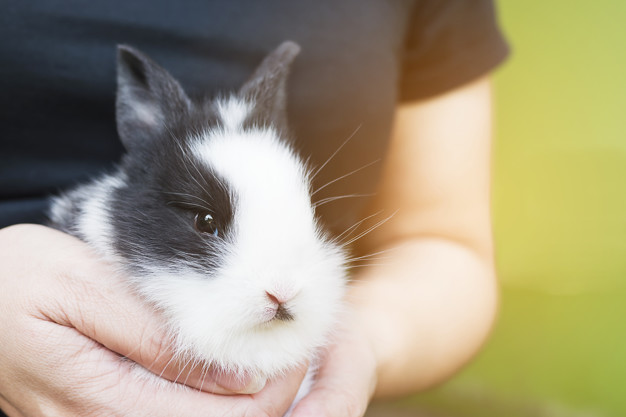 kaninchen tragen