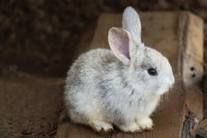 kaninchen anschaffung