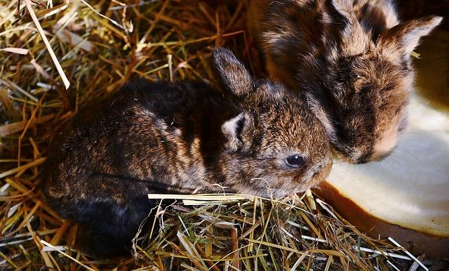kaninchenbaby niedlich