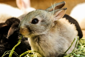 kaninchenbody kaufen