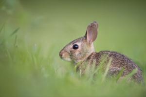 kaninchen baby