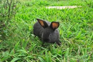 kaninchen beschäftigung