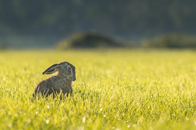 kaninchen freiland