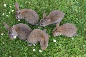 kaninchen fressen