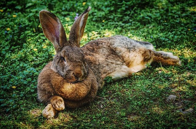 kaninchen haustiere