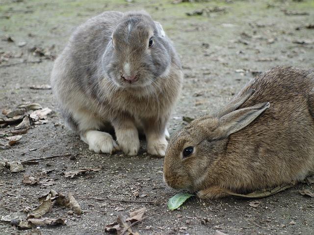 kaninchen krank