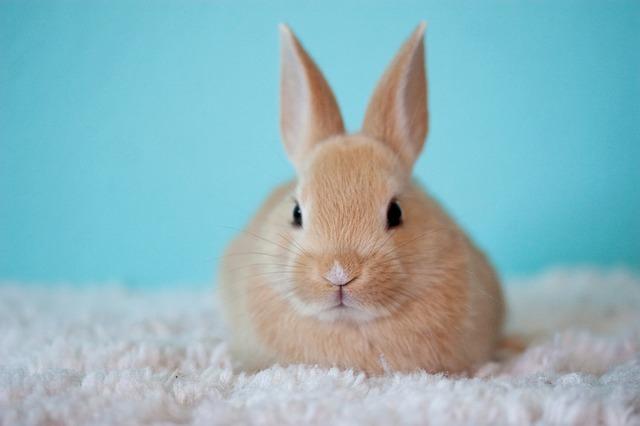 kaninchen nachwuchs