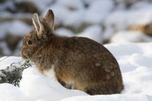 kaninchen winter