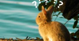 Kann man Kaninchen baden?